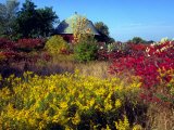 Round Barn and Goldenrod, Grand Rapids, Michigan Photographie par Ian Adams