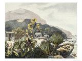 Brazil Giclee Print by Ludwig Choris