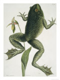 Bullfrograna Maxima Reproduction procédé giclée par Mark Catesby