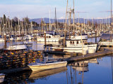 Squalicum Harbor with Mt. Baker, Bellingham, Washington Photographic Print by Jamie &amp; Judy Wild