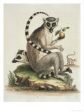 Le Maucuaco, c.1751 Giclee Print by George Edwards