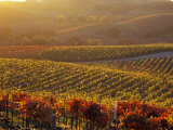 Carneros Ava. Scenic, Carneros, Napa Valley, California Photographic Print by Karen Muschenetz