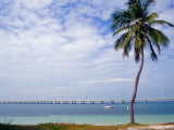 Palm Tree by Bay, Florida Keys, Florida Photographic Print by Terry Eggers