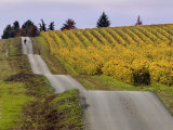 Couple Walking in Vineyard, King Estate Winery, Eugene, Oregon Photographic Print by Janis Miglavs