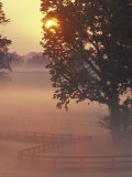 Foggy Sunrise on Horse Farm, Kentucky Photographic Print by Kent Foster