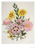 Yellow and Pink Mixed Flowers Premium Giclee Print by Edward Burne-Jones