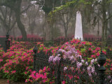 Spring Azaleas at Historic Bonaventure Cemetery, Savannah, Georgia Photographic Print by Joanne Wells