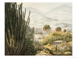 Island of St. Catherine, Brazil Giclee Print by Ludwig Choris