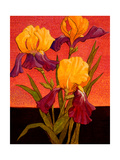 Two Toned Irises Giclee Print by John Newcomb