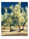 Olive Trees in Italy Giclee Print by Helen J. Vaughn