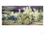 Olive Trees in the Evening Giclée-Druck von Helen J. Vaughn