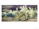 Olive Trees in the Evening Giclee Print by Helen J. Vaughn