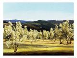 Olive Grove at the Villa Giclée-Druck von Helen J. Vaughn