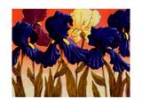 Big Iris II Giclee Print by John Newcomb