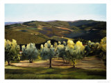Olive Grove in Italy Giclee Print by Helen J. Vaughn