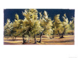 Study of Olive Trees, no.1 Giclee Print by Helen J. Vaughn