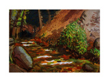 Brook at Kit Carson State Forest Giclee Print by John Newcomb