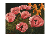 Pink Poppies Giclee Print by John Newcomb