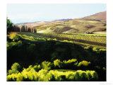 Midday in Tuscany Giclée-Druck von Helen J. Vaughn