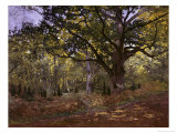 Bodmer Oak, Fontainbleau Forest Premium Giclee Print by Claude Monet