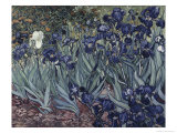Irises Giclee Print by Vincent van Gogh