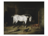 The White Horse Premium Giclee Print by John Frederick Herring II