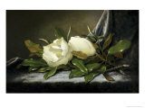 Giant Magnolias on a Light Blue Velvet Cloth Giclee Print by Martin Johnson Heade