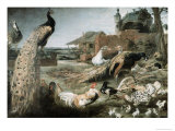The Crow in Peacock Feathers Premium Giclee Print by Frans Snyders