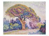 Pine Tree in St. Tropez Giclee Print by Paul Signac