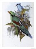 Hunting Cissa Giclee Print by John Gould