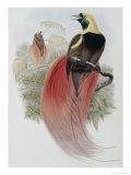 Marquis de Raggi's Bird of Paradise Giclee Print by John Gould
