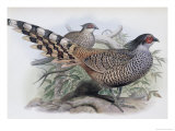 Cheer Giclee Print by John Gould