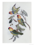 Southern Ring Perroquet Giclee Print by John Gould