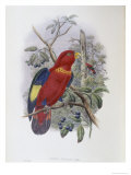 Blue, Thighed Lory Giclee Print by John Gould