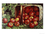 The Basket of Apples Giclee Print by Levi Wells Prentice