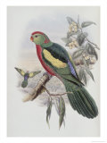 Beautiful King Parrot Giclee Print by John Gould