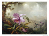 Hummingbirds and Orchids Premium Giclee Print by Martin Johnson Heade