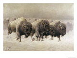 In the Teeth of the Blizzard Giclee Print by E.w. Lenders