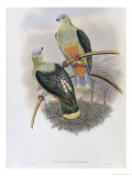 Richard's Fruit Pigeon Giclee Print by John Gould
