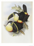 Citron, Brested Toucan Giclee Print by John Gould