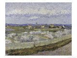 La Crau with Peach Trees in Bloom Premium Giclee Print by Vincent van Gogh