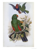 Green Lory Giclee Print by John Gould