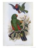 Green Lory Giclee Print by John Gould