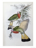 Red Throated Nyctiornis Giclee Print by John Gould