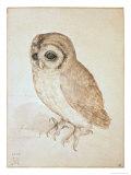 The Screech Owl Reproduction giclée Premium par Albrecht Dürer