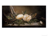 White Magnolias on a Blue Cloth Premium Giclee Print by Martin Johnson Heade