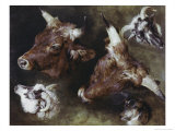 Heads of Sheep and Cattle Giclee Print by Edwin Landseer