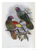 Red Fronted Lory Giclee Print by John Gould