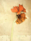 Amaryllis I Fiori Collectable Print by Bruno Bruni