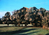 Wrapped Trees XIII Collectable Print by Christo 
